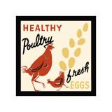 Pollos de calidad: huevos frescos Lámina giclée