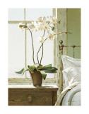 Orchidées sur table de chevet Reproduction procédé giclée par Zhen-Huan Lu