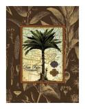 Date Palm Giclee Print by Karl Rattner