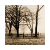Harold Silverman - Woods with Fence Digitálně vytištěná reprodukce