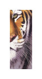 Tiger Eye Giclee Print by Ridder