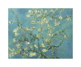 Branches d'amandier en fleurs, Saint-Rémy, 1890 Impression giclée par Vincent van Gogh