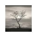 Tree, Study, no. 5 Giclee Print by Andrew Ren