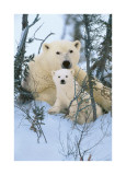 Northern Nursery Giclee Print by Art Wolfe