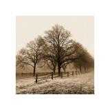 Row of Trees Lámina giclée por Harold Silverman