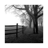 Harold Silverman - Rohový plot Digitálně vytištěná reprodukce