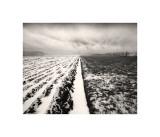 Stormy Field Giclée-tryk af Andrew Ren
