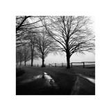 Harold Silverman - After the Rain Digitálně vytištěná reprodukce