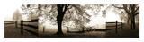 Harold Silverman - Frosted View Digitálně vytištěná reprodukce
