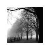 Black and White Morning Giclee Print by Harold Silverman