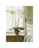 Orchidées sur table de chevet Impression giclée par Zhen-Huan Lu