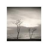 Tree, Study, no. 4 Giclee Print by Andrew Ren