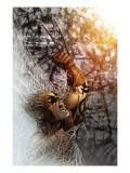 Dark Wolverine No.83 Cover: Wolverine Poster by Salvador Larroca