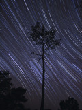 A View of Star Trails Taken in the Middle of a Pine Forest in Fonte Da Telha, Portugal Photographic Print