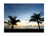 Two Palms Photographic Print by John Gusky