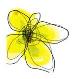 Yellow Petals 1 Giclée-trykk av Jan Weiss