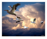 Angels in Flight Photographic Print by Bill Stephens