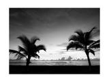 Two Palms BW Fotografisk trykk av John Gusky