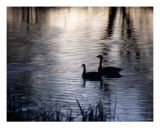 The Stillness Photographic Print by Bill Stephens