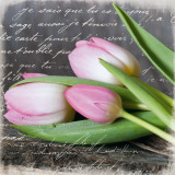 Poetry Tulips Print by Andrea Haase