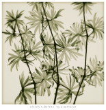 Wild Geranium Print by Steven N. Meyers