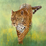 Kalina, le Jaguar Prints by Danielle Beck