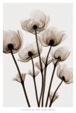 Windblumen Poster von Steven N. Meyers