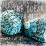Blue Ocean Shells Poster by Andrea Haase