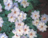 Clematis Art by Claude Monet