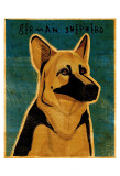 German Shepherd Print by John Golden
