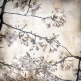 Cherry Blossom Tree VI Prints by Tony Koukos