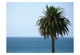 Palm at Moonlight Beach Prints by Jenny Kraft