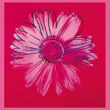 Andy Warhol - Daisy, c.1982 (Crimson and Pink) - Reprodüksiyon