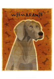 Weimaraner Print by John Golden