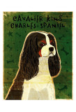Cavalier King Charles (tri-color) Posters by John Golden
