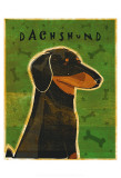 Dachshund Art by John Golden
