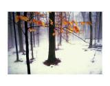 Stille Wälder Kunstdrucke von David Winston
