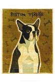 Boston Terrier Poster by John Golden