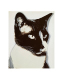 Cat, c.1976 Kunst von Andy Warhol