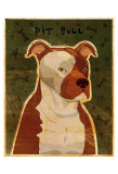 Pit Bull Póster por John Golden