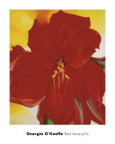 Red Amaryllis, c.1937 Posters by Georgia O&#39;Keeffe