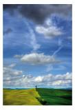 Tuscany IV Posters by Maciej Duczynski