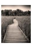 Towards Woods Prints by Andrew Ren