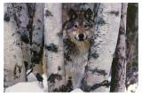 Gardien des montagnes Poster par Art Wolfe