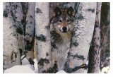 Bergwacht Kunstdruck von Art Wolfe
