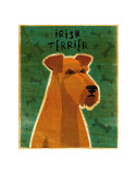 Irish Terrier Posters by John Golden