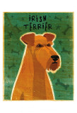 Irish Terrier Art by John Golden