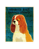 Cavalier King Charles (blenheim) Posters by John Golden