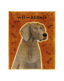 Weimaraner Poster by John Golden