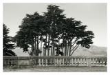 Cypress Trees and Balusters Prints by Christian Peacock